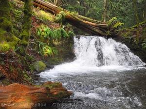 Rustic Falls, Moran State Park